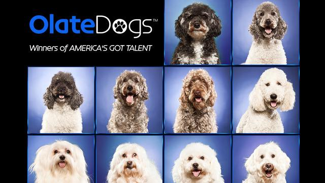 Olate Dogs: America's Got Talent Winners - Season 7