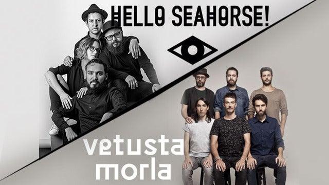 Hello Seahorse!