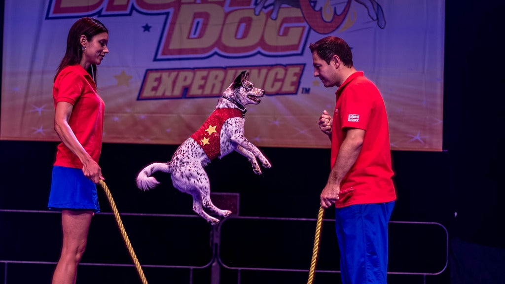 Hotels near Stunt Dog Experience Events