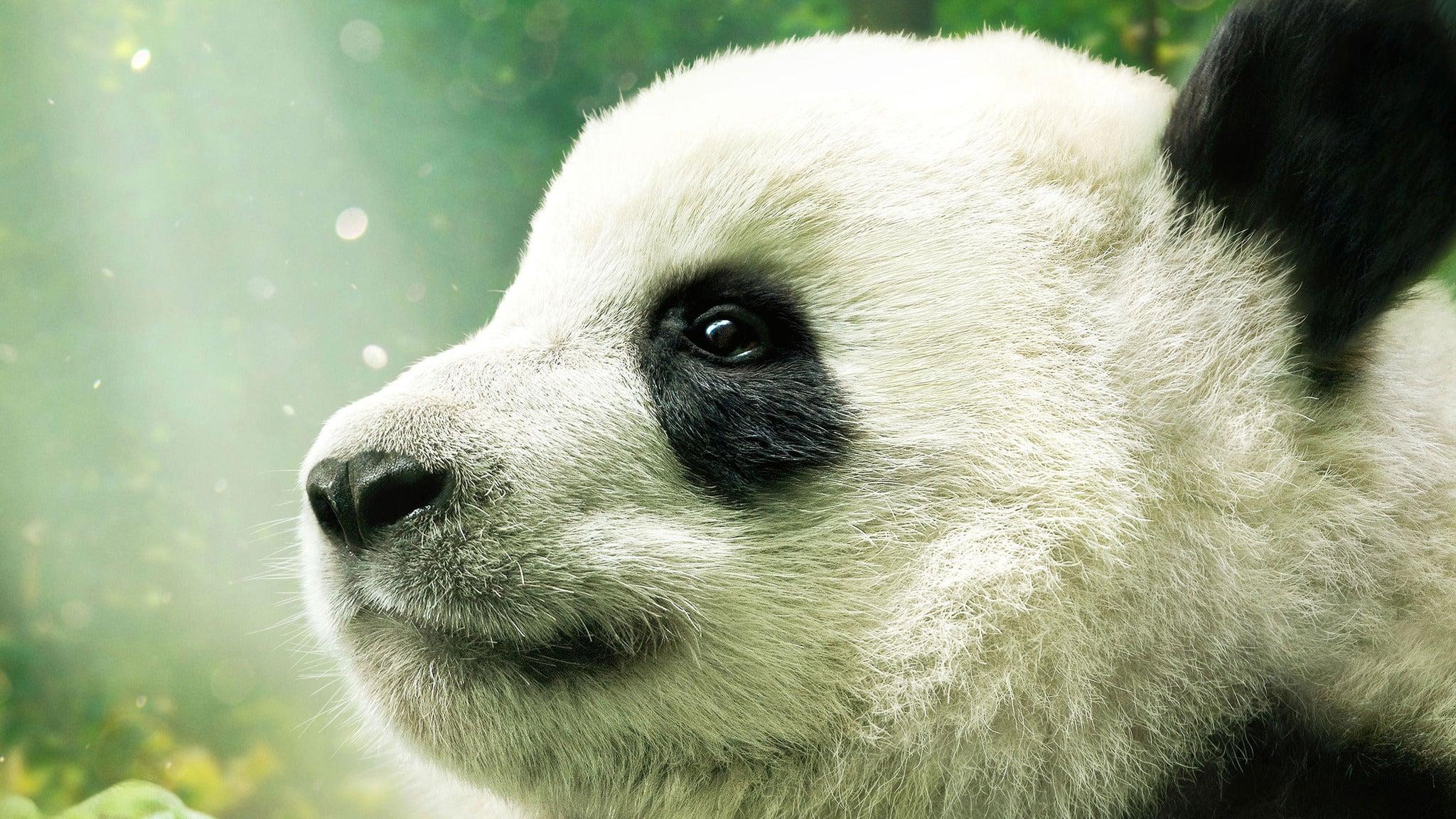 Pandas 3D