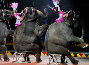 Hadi Shrine Circus