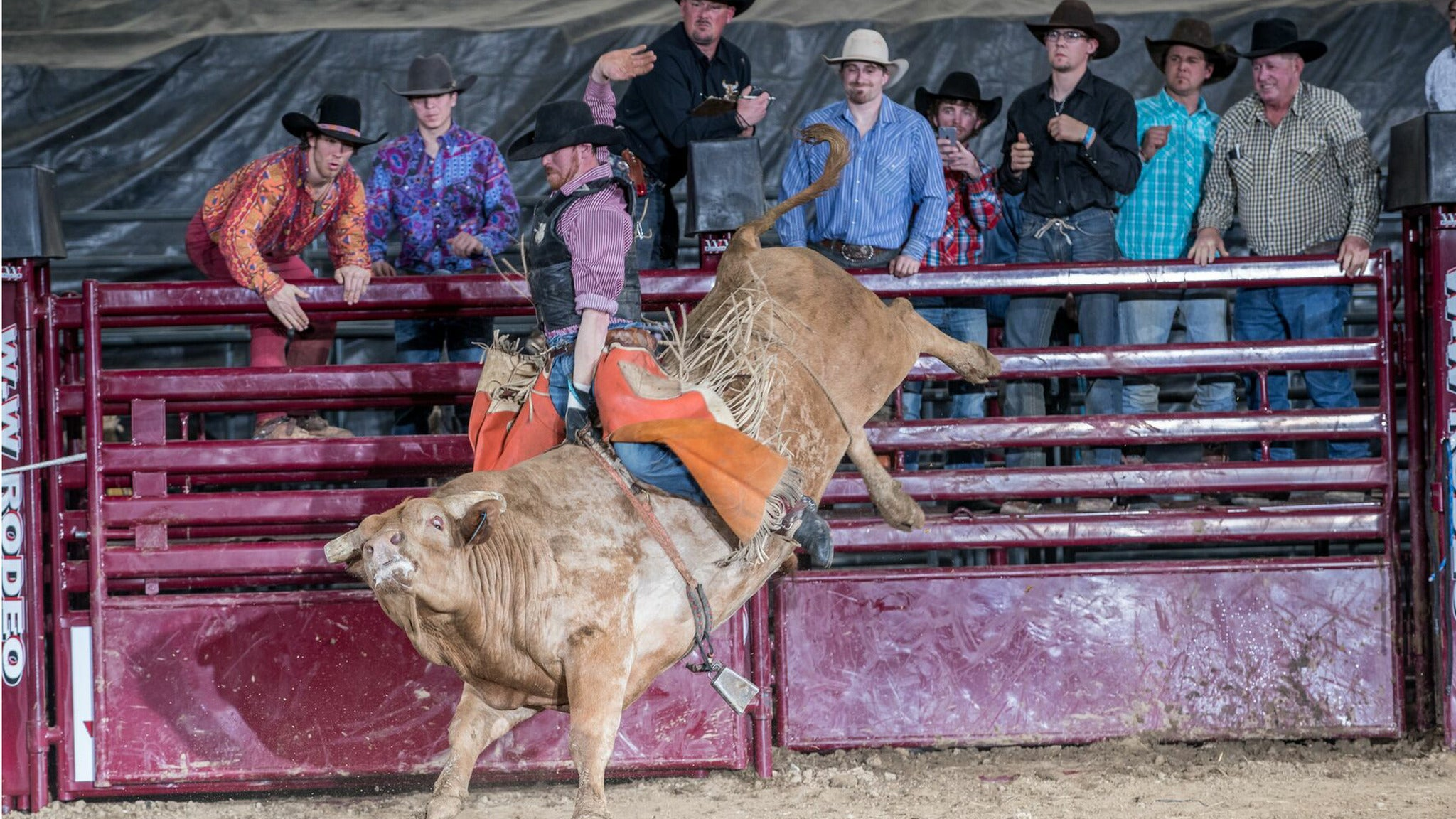 Xtreme Bulls And Bands