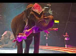 Syrian Shrine Circus