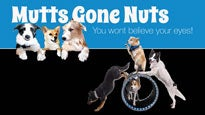 Mutts Gone Nuts at Amaturo Theater at Broward Center - Ft Lauderdale, FL 33312