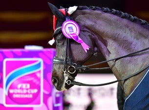 neuro socks Amadeus Horse Indoors