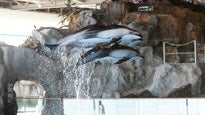 John G. Shedd Aquarium - Aquatic ShowTickets