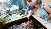 Shedd Aquarium Behind the Scenes ToursTickets